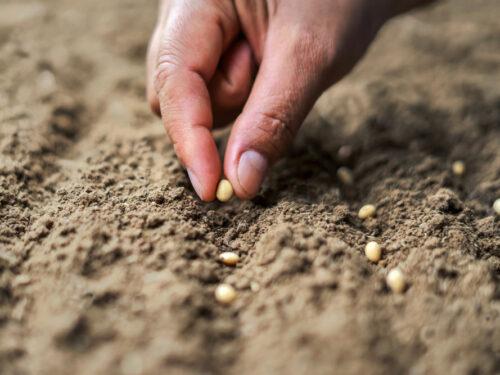 Semina: Quando, Cosa e Come